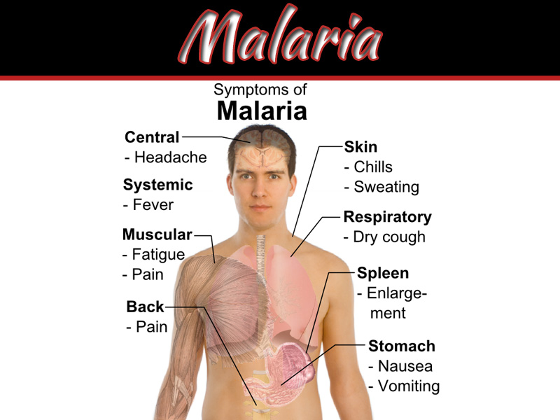 What Are The Symptoms Of Malaria?