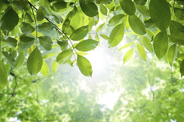 Environment Considerations
