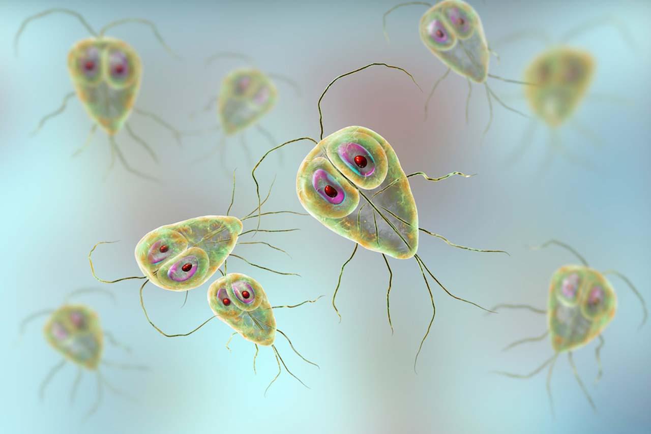 What Is Giardiasis?