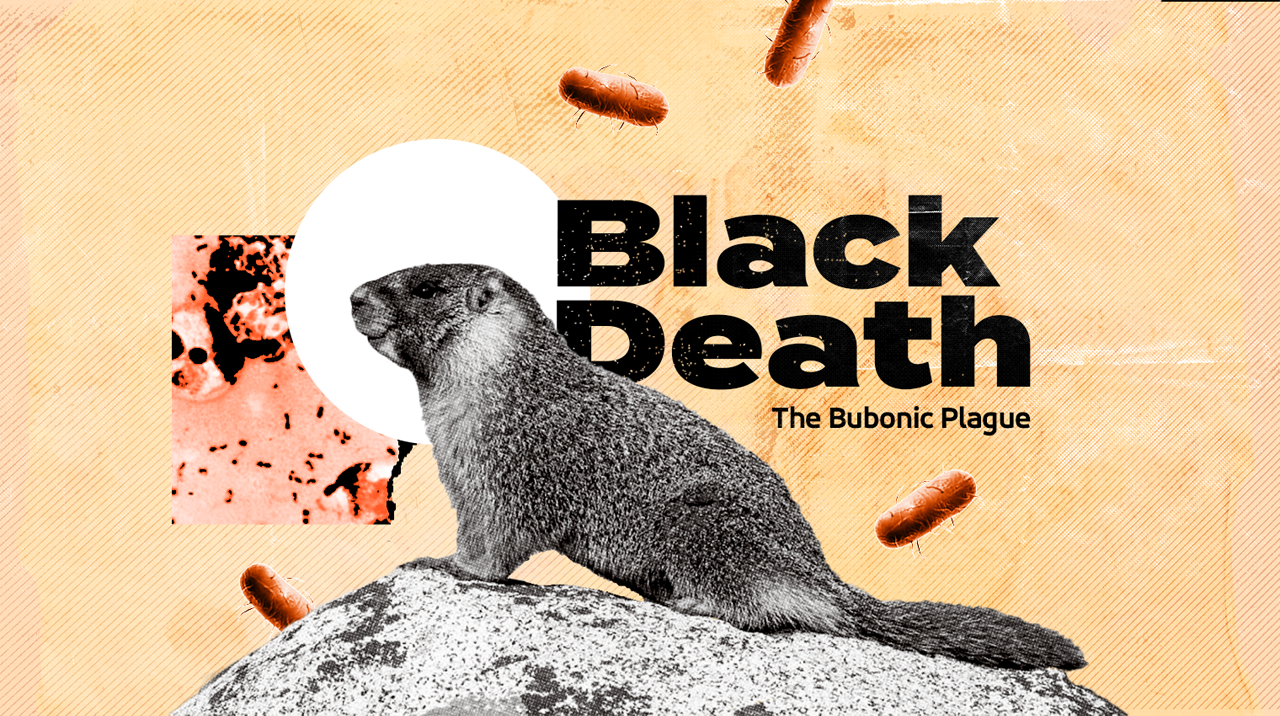 What Is The Bubonic Plague
