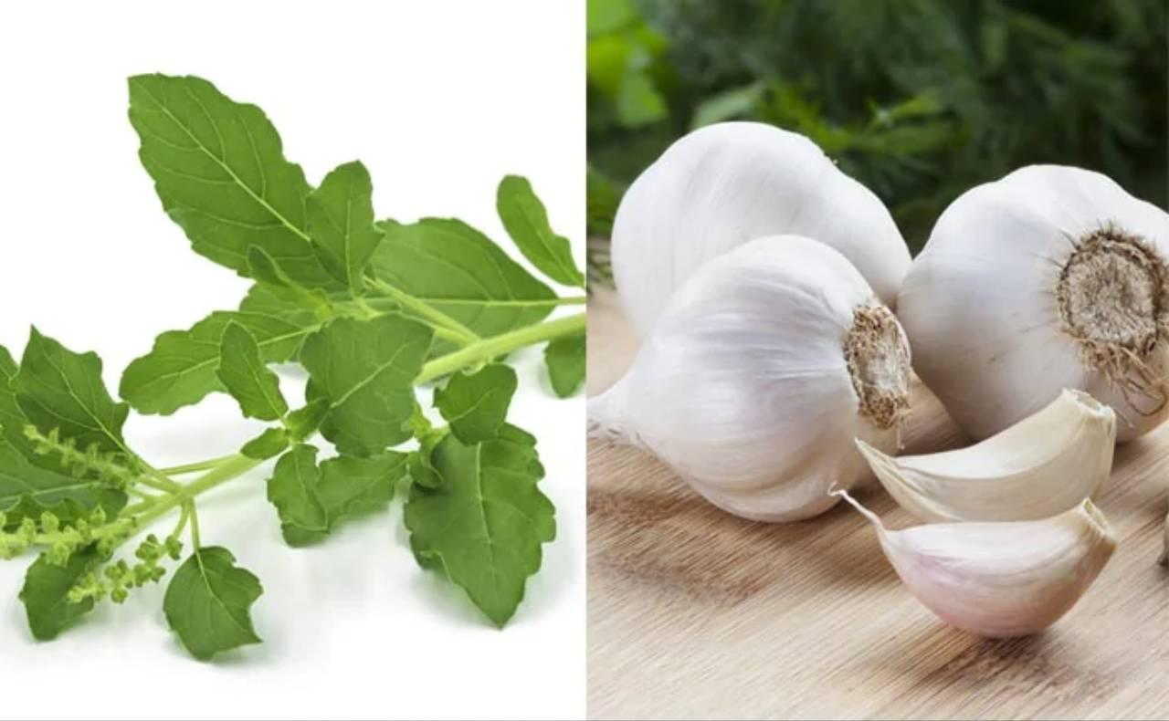 Magical Herbs To Control High Blood Pressure