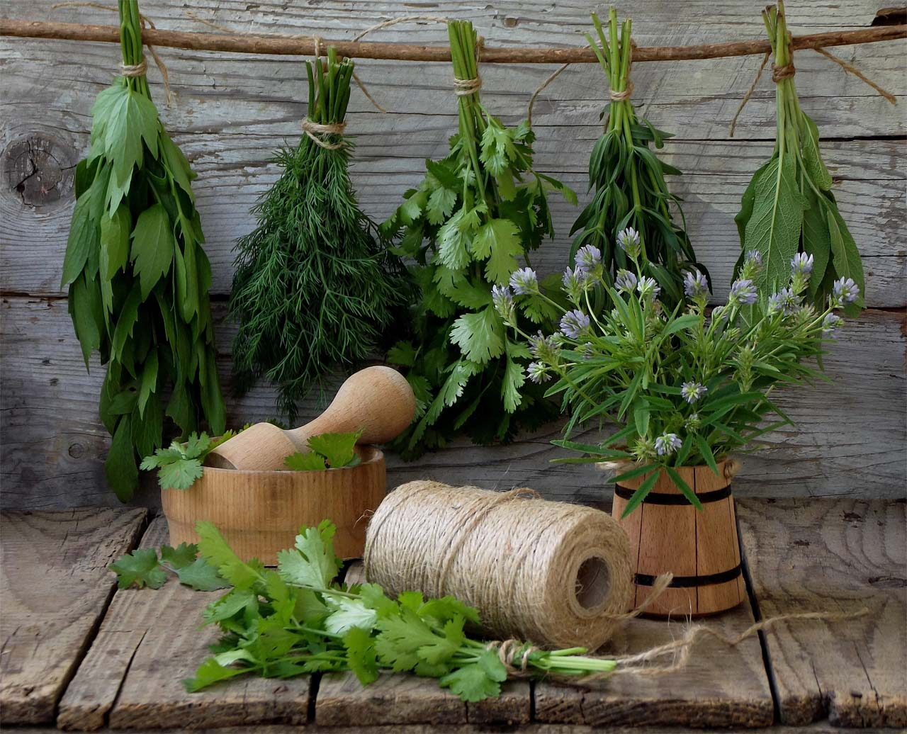 Types Of Medicinal Plants For Healthy Living